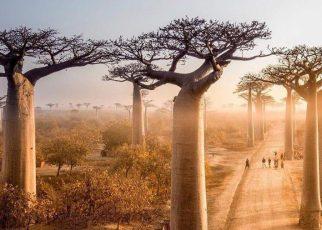 Bạn có biết: 7 rừng cây kỳ lạ với những góc sống ảo cực xịn sò trên thế giới?